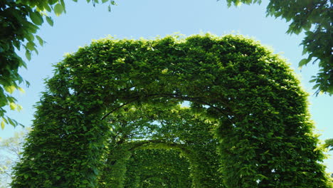 Tunnel-Of-Leafy-Green-Arches