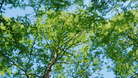 Spinning-Under-Green-Tree-Branches-03
