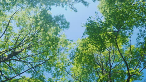 Spinning-Under-Green-Tree-Branches-04