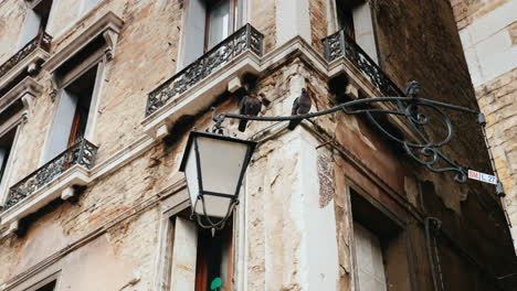 Pigeons-on-Lamppost-In-Venice