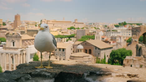 Seagull-by-Roman-Forum