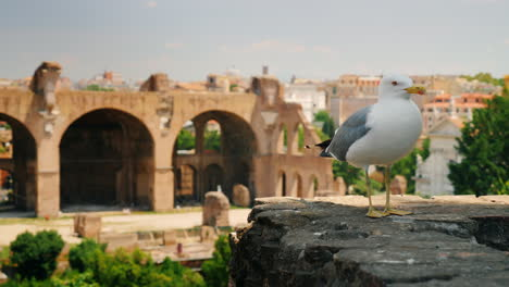 Seagull-by-Forum-in-Rome