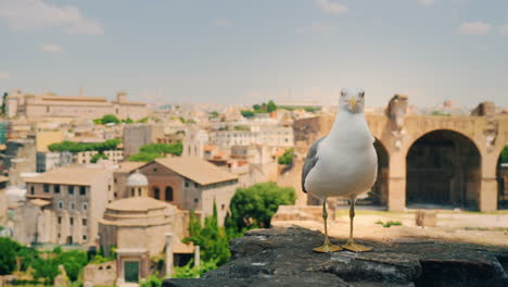 Seagull-and-Ruins-of-Forum-in-Rome