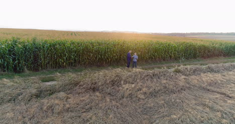 Young-Farmers-Discussing-At-Maize-Field-Agriculture-28