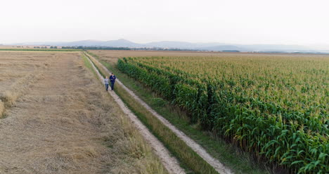 Young-Farmers-Discussing-At-Maize-Field-Agriculture-9