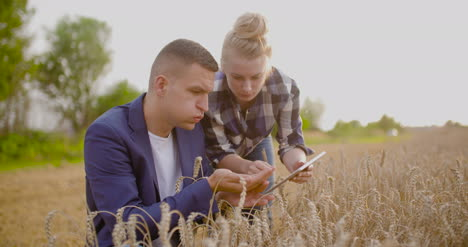 Farmer-Examining-Wheat-Crops-In-Hands-While-Using-Digital-Tablet-1