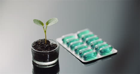 Panning-Shot-Of-Potted-Plant-By-Capsules-Packet-On-Table