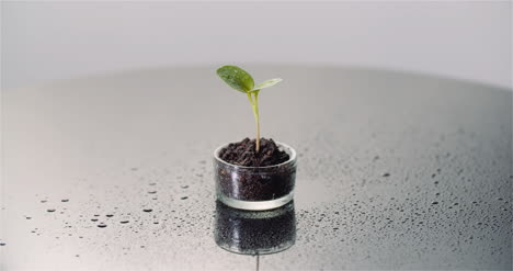 Agriculture-Concept-Young-Plant-Rotating-On-Black-Background-3