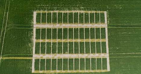 Aerial-View-Of-Beautiful-Agricultural-Landscape