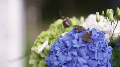 Close-Up-Of-Butterflies-Pollinating-On-Fresh-Blue-Flowers