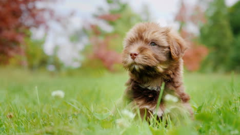 Cute-Puppy-on-Grass
