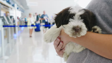Woman-Holding-Puppy-in-Airport