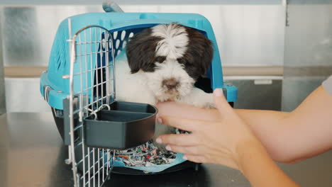 Placing-Puppy-in-Pet-Carrier