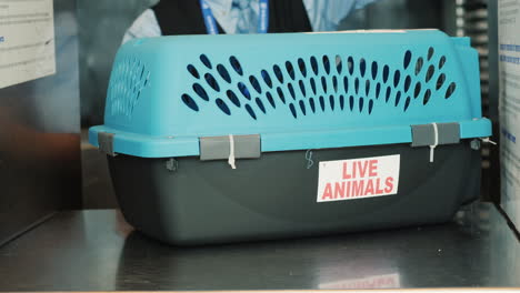 Preparing-Pet-Carrier-for-Animal-Transport