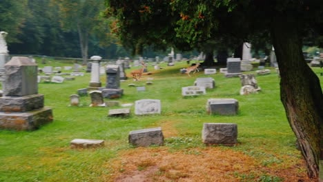 Two-Deer-Run-Through-Cemetery