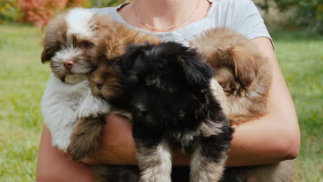 Woman-Holding-Small-Puppies-