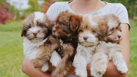 Woman-Holding-Four-Small-Puppies-