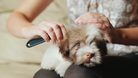 Woman-Grooming-Fluffy-Puppy