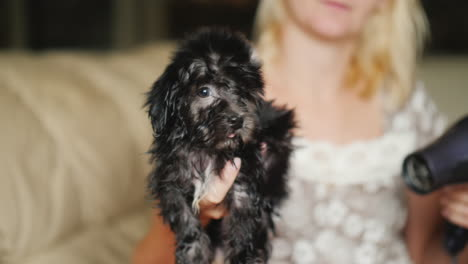 Woman-Dries-Black-Puppy-With-Hair-Dryer