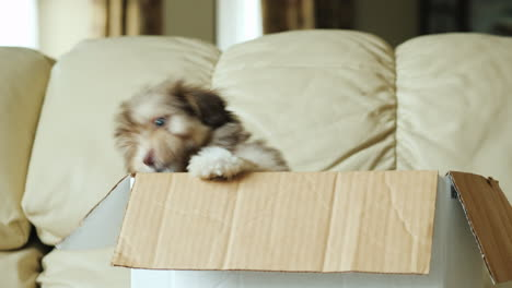 Puppies-in-a-Box