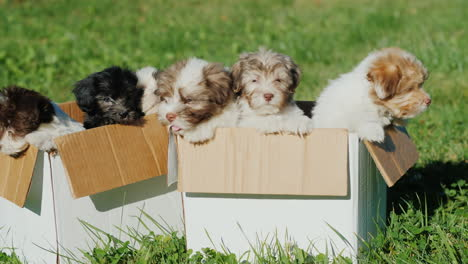 Puppies-in-Boxes