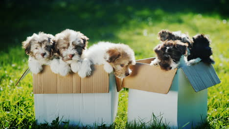 Cute-Puppies-in-Cardboard-Boxes