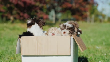 Cute-Puppies-In-Cardboard-Box