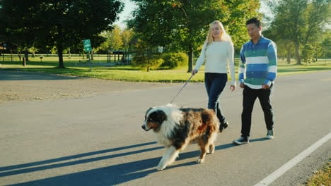 Couple-Walking-Australian-Shepherd-Dog