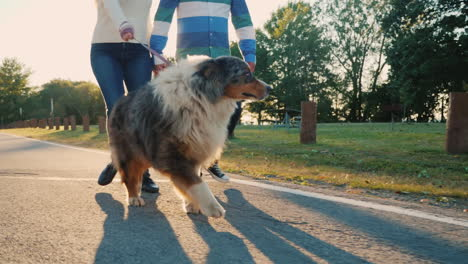 Couple-Walking-Fluffy-Dog