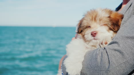 Puppy-by-the-Sea