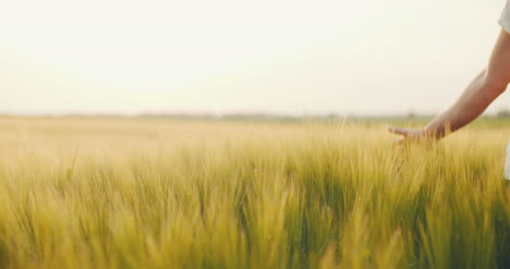 Man-S-Hand-Touching-Wheat-Field-