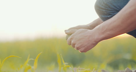 Soil-Agriculture-Farmer-Hands-Holding-And-Pouring-Back-Organic-Soil-