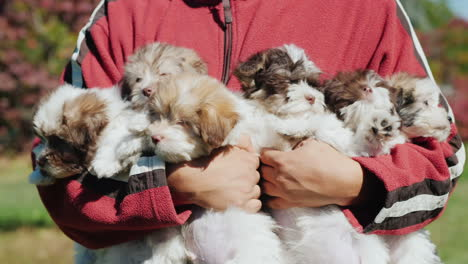 Man-With-Arms-Full-of-Puppies