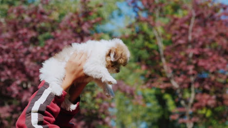 Hands-Holding-Puppy-in-Air
