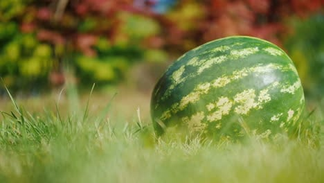 Fresh-Watermelon-on-Grass