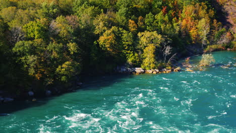 Forest-on-Niagara-River-Bank
