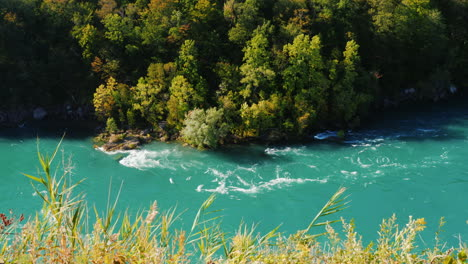Green-Forest-on-Niagara-River-Bank