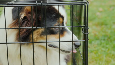 Dog-In-Cage-Close-Up