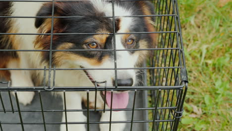 Dog-In-Cage-Close-Up-From-Above
