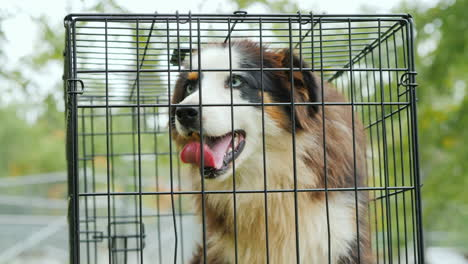 Anxious-Dog-in-Cage