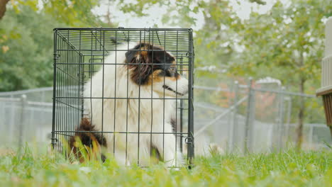 Sad-Dog-in-a-Cage