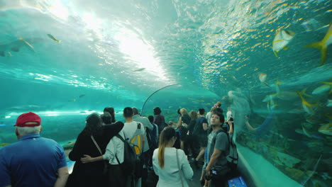 Visitors-in-Aquarium-Shark-Tunnel