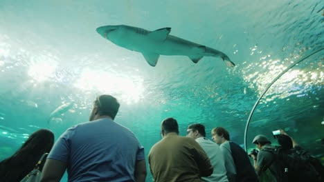 Shark-Swims-Overhead-in-Aquarium-Tunnel