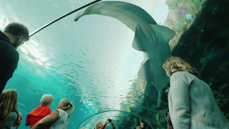Stingray-and-Sawfish-in-Aquarium-Tunnel