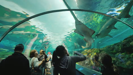 Shark-and-Sawfish-in-Aquarium-Tunnel
