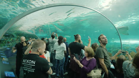 Aquarium-Visitors-Admire-Sharks