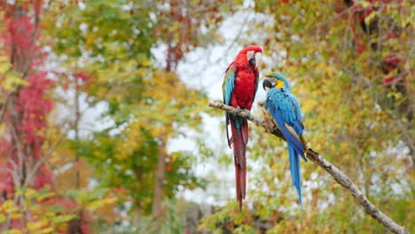 Two-Parrots-On-A-Branch