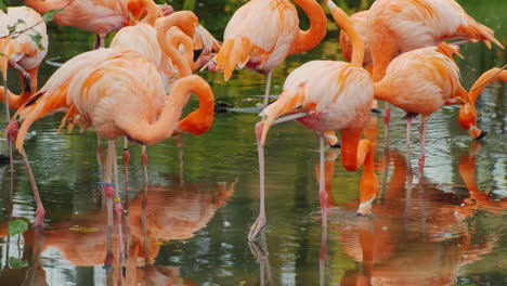 Pink-Flamingos-in-a-Pond