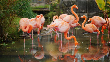 Flock-of-Pink-Flamingoes