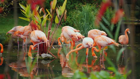Flamingos-in-a-Pond